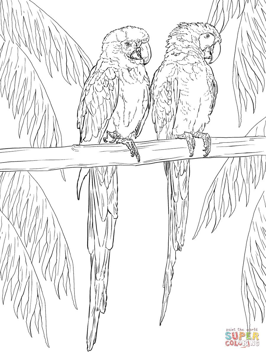 Ara Kleurplaat Google Zoeken Bird Coloring Pages Parrots Art Pencil Drawings Of Animals