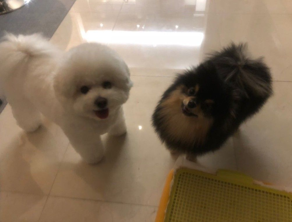 Yeontan And Simba Bts Dogs Pets Doggy