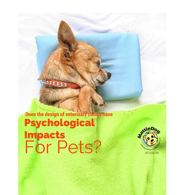 Does The Design Of Veterinary Clinics Have Psychological Impacts For Pets Veterinary Clinic Veterinary Pets