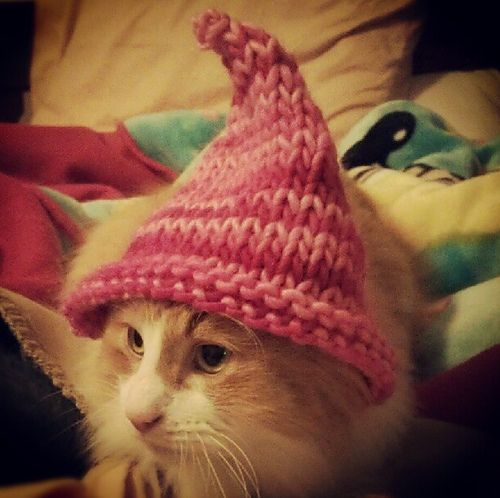 Ravelry Gnome Hat For Cats Knitting Pinterest Gnomes Ravelry