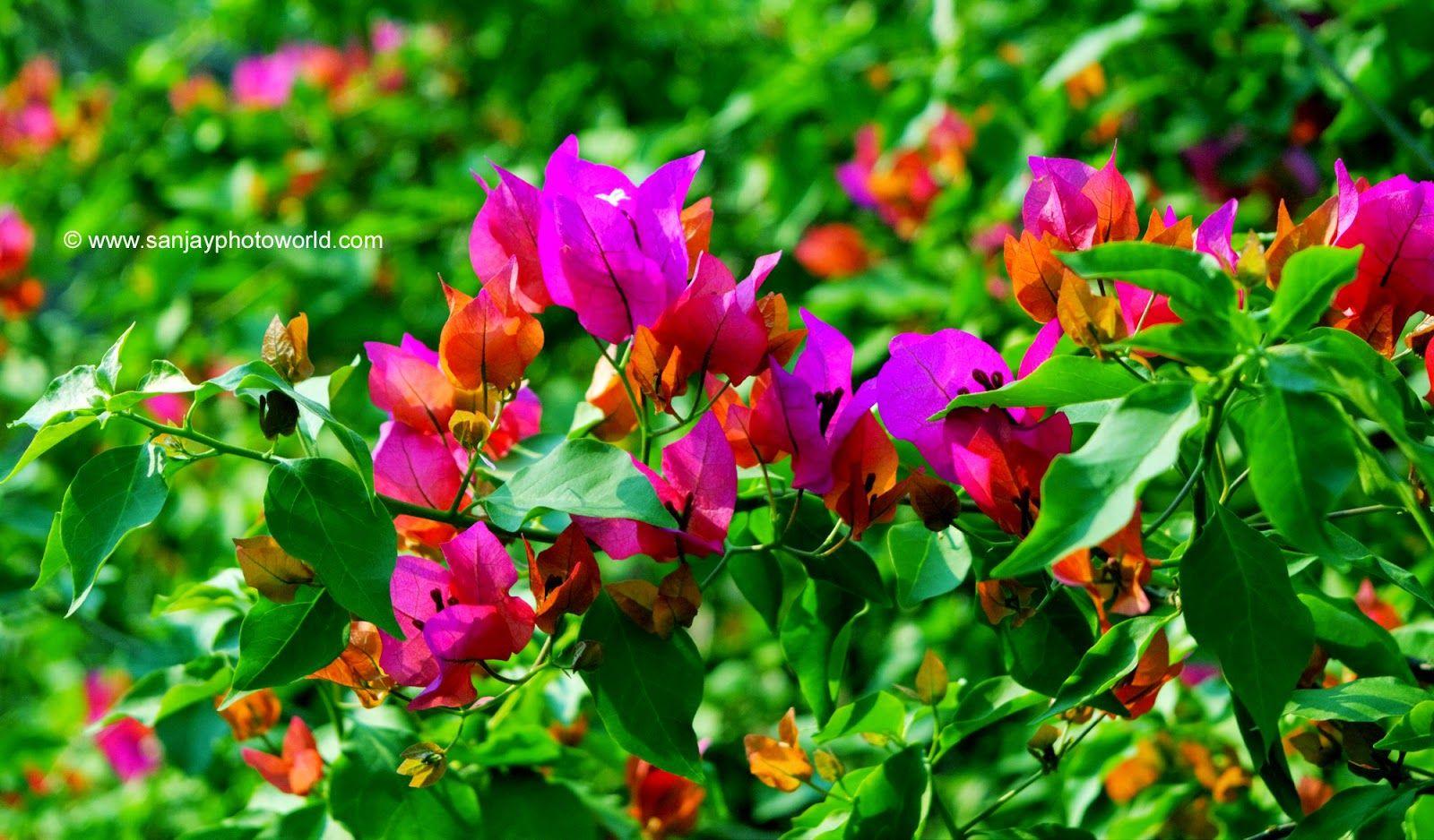 Flower Background Wallpaper For Adobe Photoshop Free Download Flower Background Wallpaper Hd Nature Wallpapers Nature Wallpaper