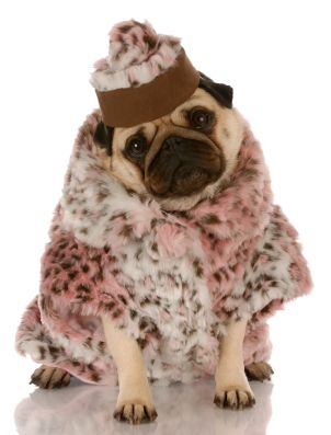 This Is How Fancy Dogs Prepare For A Blizzard Cute Pugs Pugs