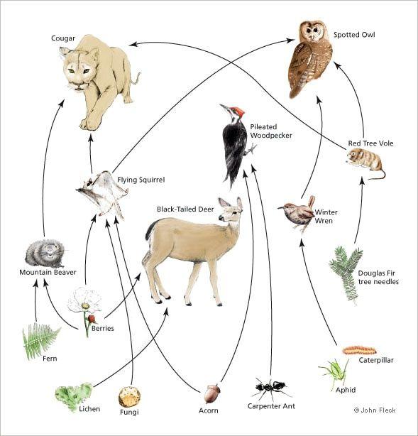 Forest Floor Food Web | Food Web Deciduous Forest | Pinterest ...