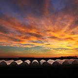 Greenhouses in Vojvodina, Serbia
