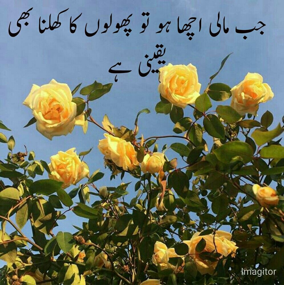 Pin by صفیہ on haqeeqat Flower aesthetic, Yellow