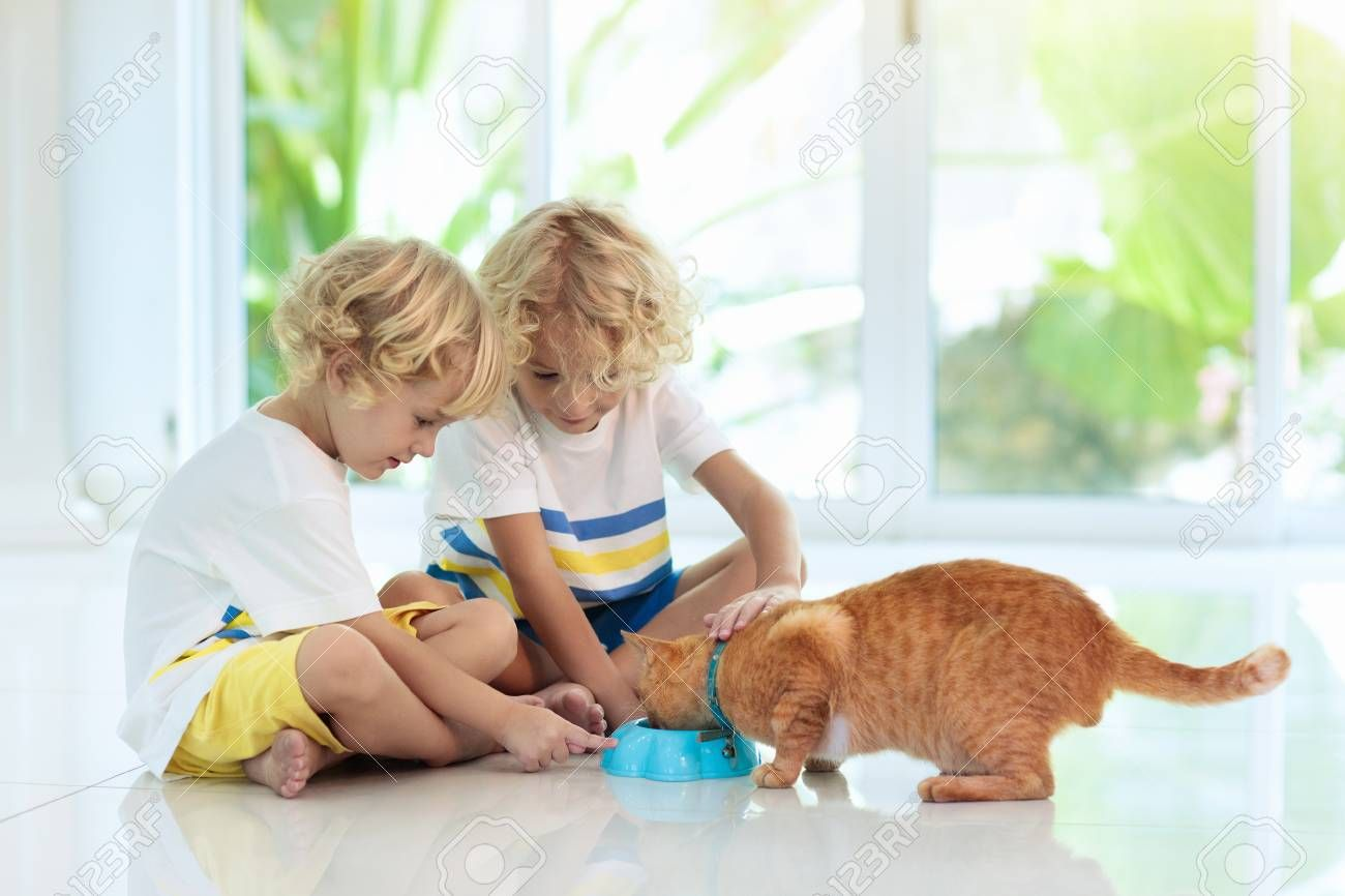 Child feeding cat at home. Kid and pet. Little blond curly boy playing with kitten in white kitchen at window. Domestic animals and pets for children. Cats food and drink. Kids feed cat. Stock Photo , #Affiliate, #boy, #curly, #blond, #white, #kitten