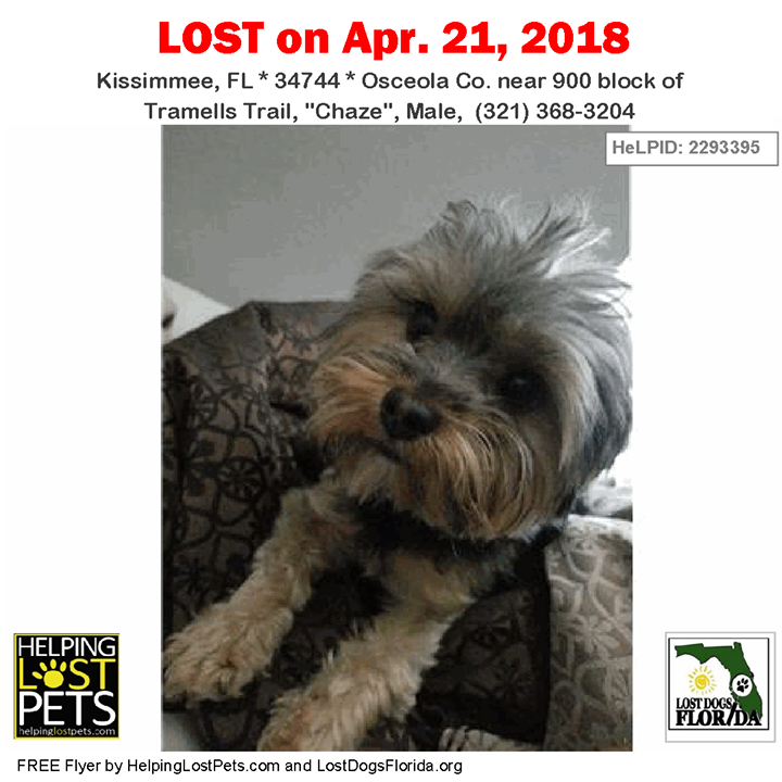 Have You Seen This Dog Lostdog Chaze Kissimmee 900 Block Of