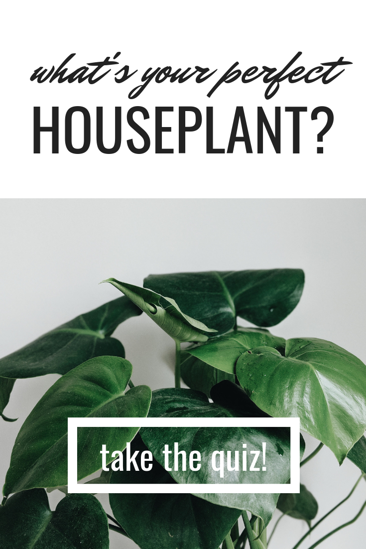 Take This Quiz And Find The Perfect Houseplant For You Your Home Revivenursery Becomingplanty