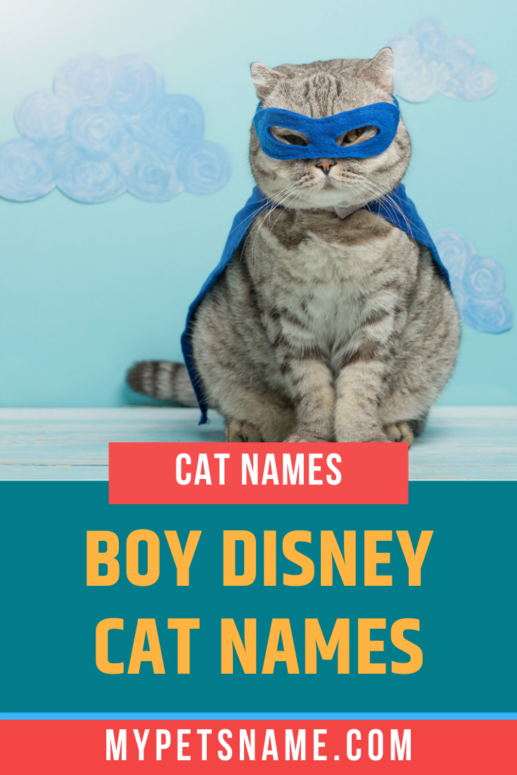 Within our list of boy Disney cat names, there are so many