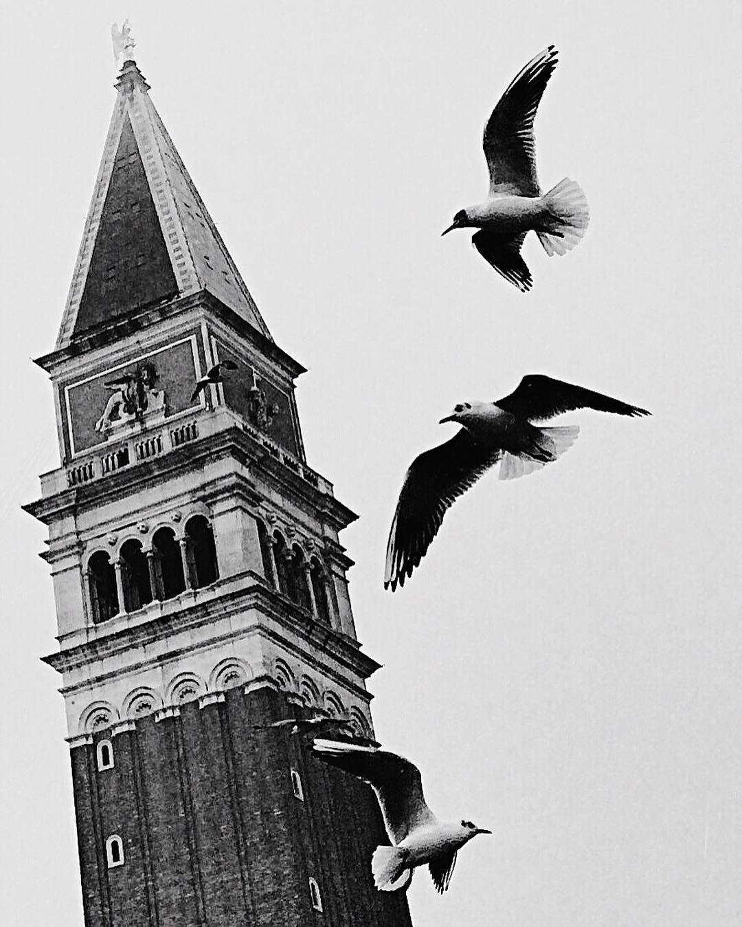 Arrivai a Venezia in un giorno di pioggia alzai gli occhi e capii che stavo sognando #venezia #venice #ig_venice #ig_venezia #igersvenezia #monochromatic #monochrome #noir #blackandwhite #bw #bw_lover #bwlovers #bwstyleoftheday #bwstyleoftheday #atmosfera #atmosphere  #capture #capture_today #campaniledisanmarco #piazzasanmarco #bird #gabbiano #fly #sogno #tempo #adorovenezia #instabw #instavenice #instagood by ve_bub