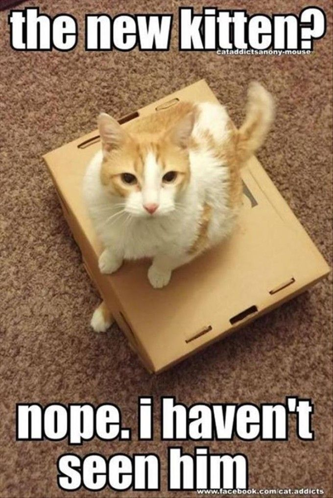 Funny Cat Memes That Will Make You LOL Funny Cat Memes - 25 cats getting awkward situations