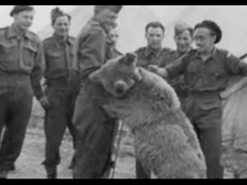 Wojtek. The soldier bear. (Syryjski niedźwiadek Wojtek-II Korpus ...