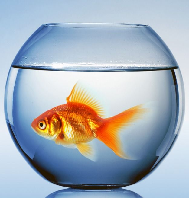 Image result for image of fish bowl