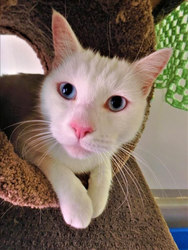 Hiya I M Molly Meldrum You Can Find Me At The Ipswich Shelter I Love Cuddles Cheek And Chin Scratches And Food I M Really Easy T Adoption Cuddling Animals