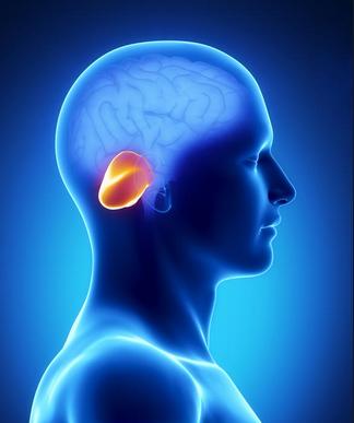 počet nápadov na tému cerebellar ataxia na pintereste: 17, Skeleton