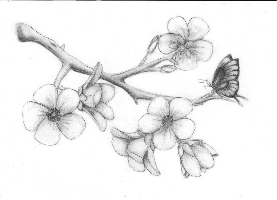 Cherry Blossoms By Solie Solie Deviantart Com On Deviantart Pencil Drawings Of Flowers Flower Drawing Tree Drawings Pencil