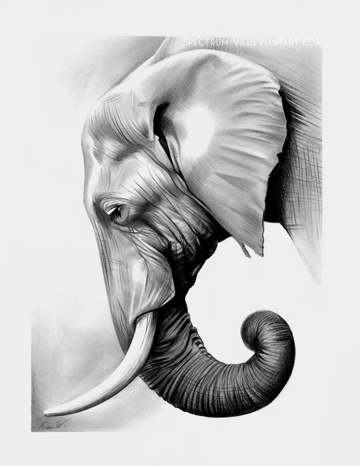 Realistic Elephant Face Drawing : realistic, elephant, drawing, Elephant, Graphite, Drawing,, Animal, Drawings,