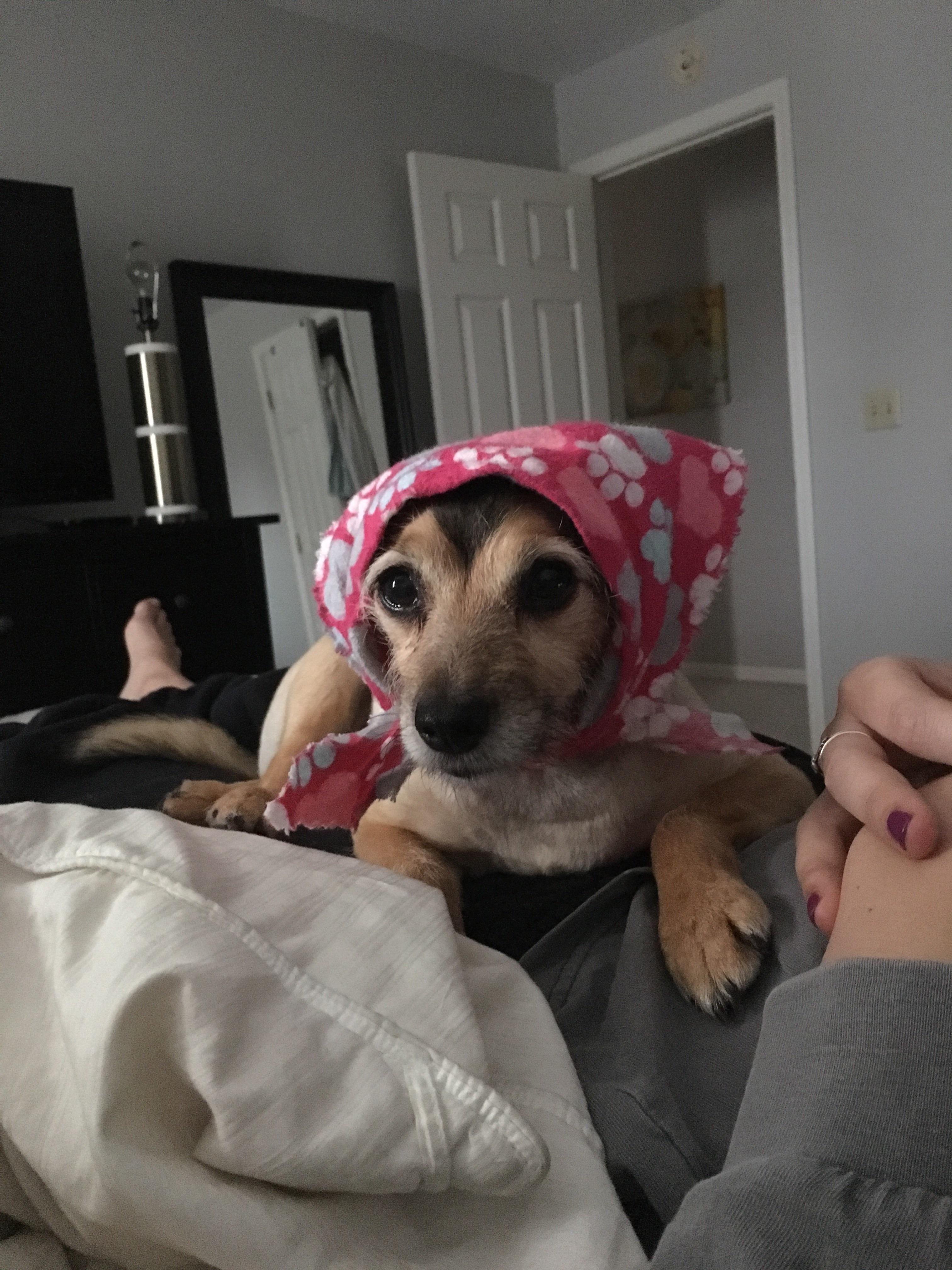 Hi Reddit please wish our sweet girl Mya luck in surgery