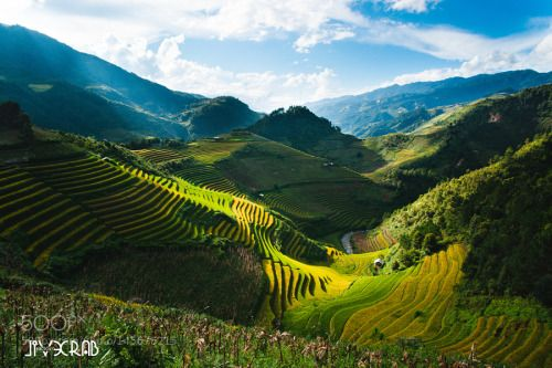 Valley of terraces by EvilCrab  green mountain valley rice terraces viet_nam Valley of terraces EvilCrab