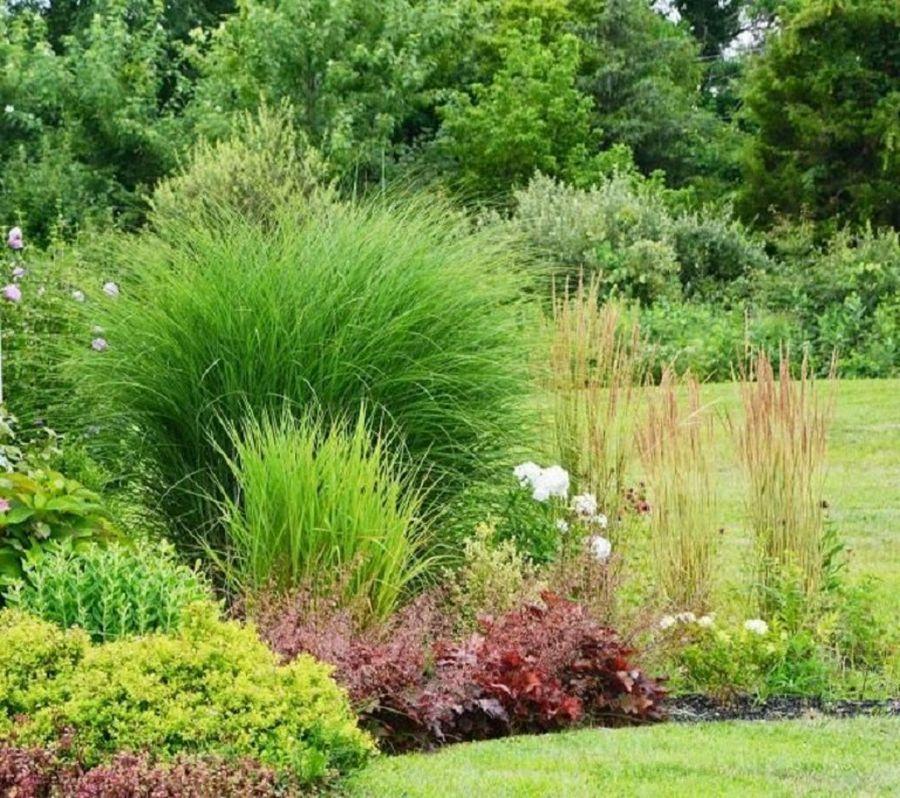 Ideas De Diseño De Jardines Residenciales: Jardines En Los Que Las Gramíneas Ornamentales Son