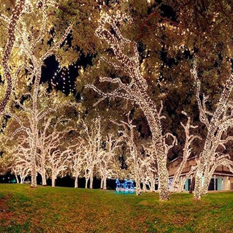 100 Led Solar Powered Fairy Lights 55 Ft Solar Powered Garden Lights Outdoor Solar Lights Solar Powered Fairy Lights