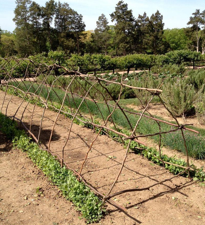 Potager Garden Blogs: Inspiring Gardens: Mount Vernon...