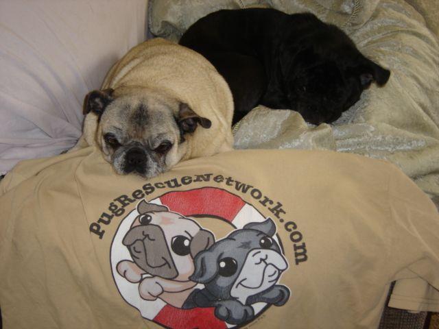 Www Pugrescuenetwork Com Pug Rescue Pug Love Pugs