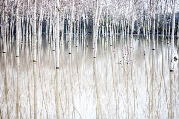 La tranquilidad del Río Po, Italia   pues es el blanco y tranquilo llamado Río Po, está lleno de árboles de palos blancos.