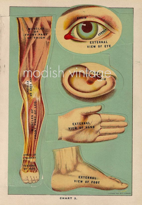 antique 1916 fold out medical ephemera / eye foot ear chart
