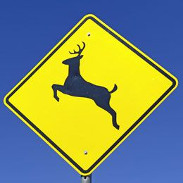 Does Your Auto Insurance Provide Coverage For Hitting Deer Car