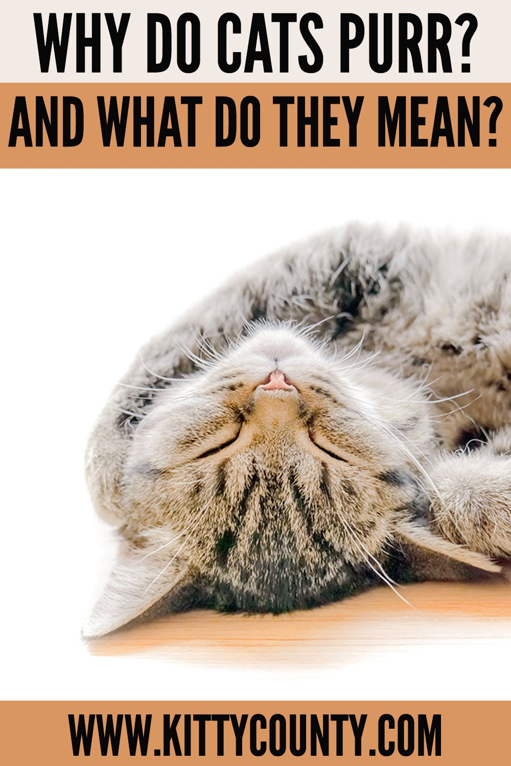 Why Does A Cat Purr The Reasons May Surprise You Kitty County In 2020 Why Do Cats Purr Cat Purr Cats