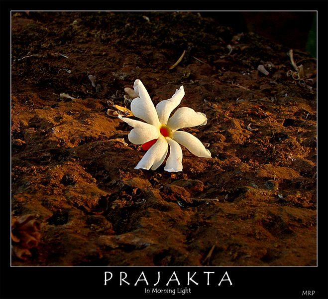 Prajakta Photo Flower Aesthetic Wonderful Flowers Flowers Nature
