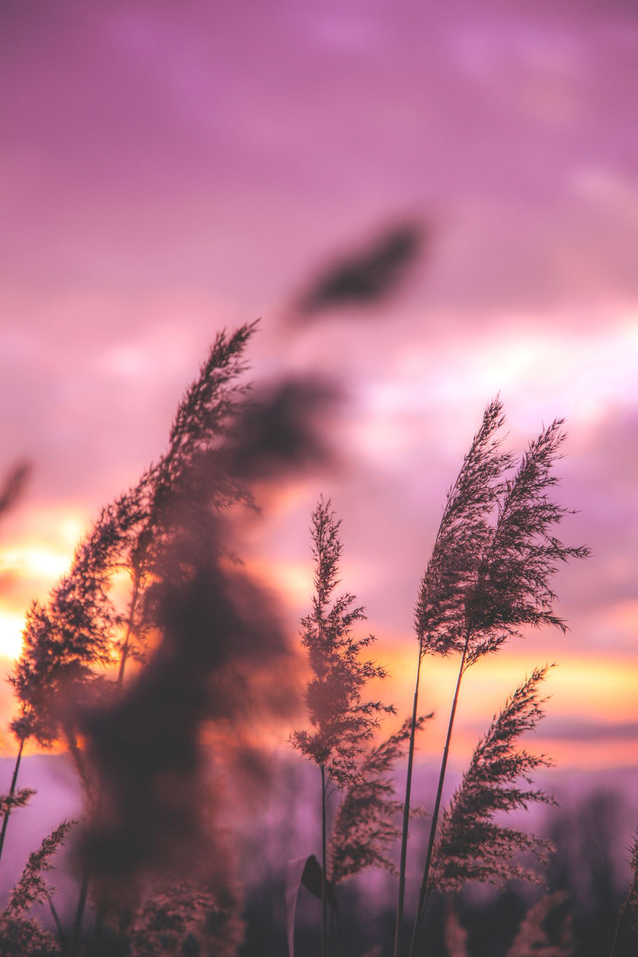 Pin By Zaniyah On All Beautiful Nature Photography Nature Pictures Scenery Hd wallpaper nature reeds grass sunset