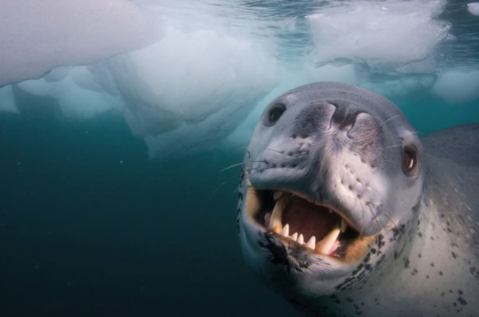 A photographers incredible encounter with a leopard seal ...
