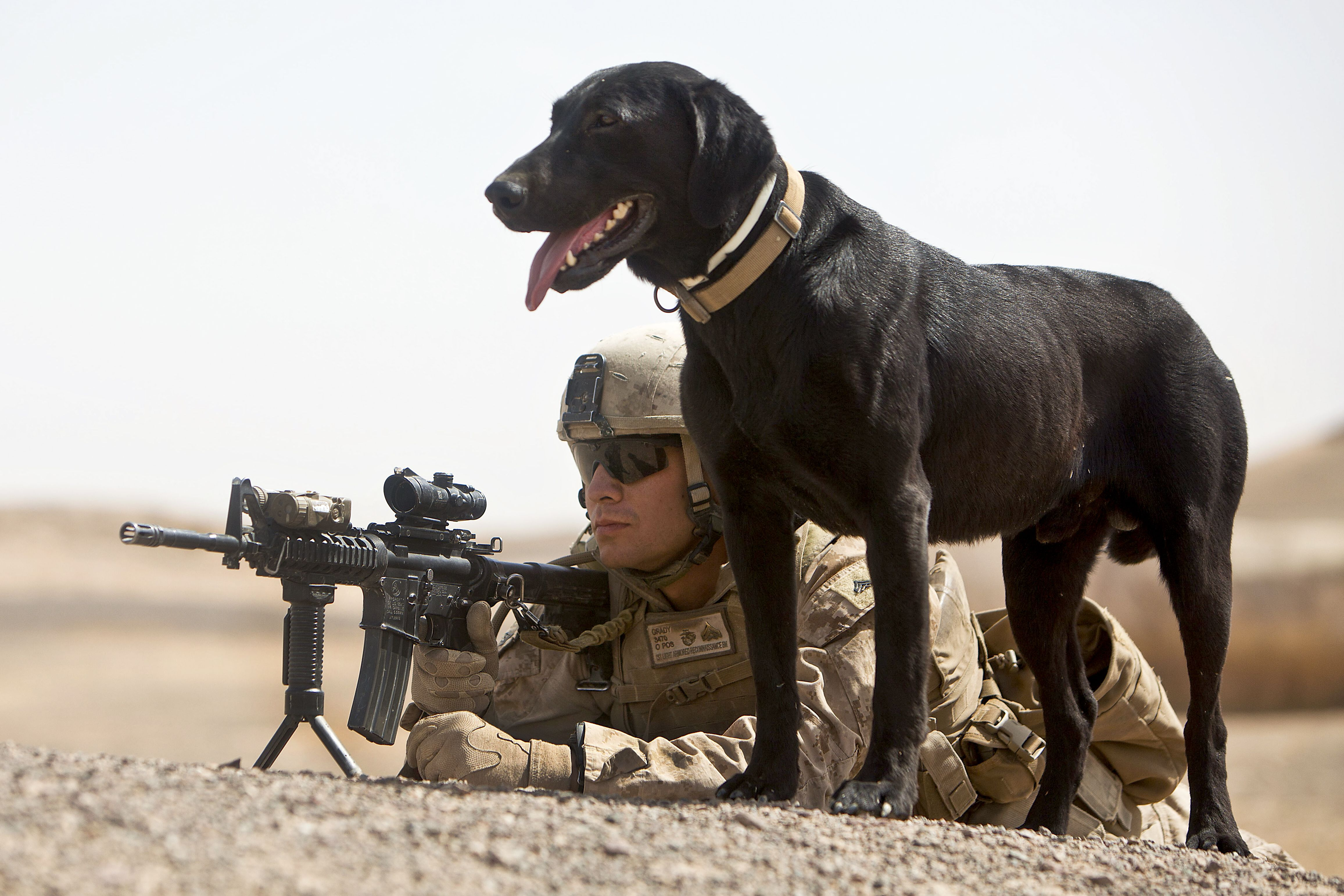 U S Marine Cpl Sean Grady And Ace A Military Working Dog