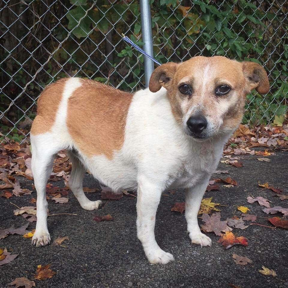 Cojack Dog For Adoption In Cincinnati Oh Adn 722059 On