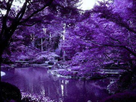 Violet Japanese garden Desktop Nexus Wallpapers