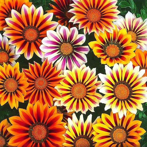 Plantas del mes de Julio Color mixing, Plants, My flower