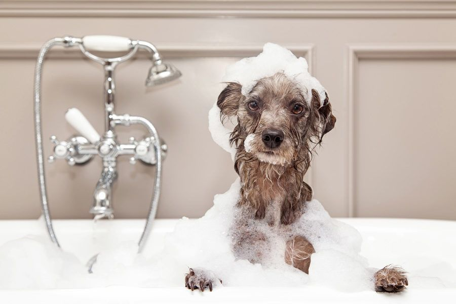 Winter Dog Baths 7 Ways To Clean Your Dog During Cold Weather