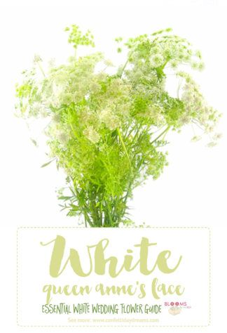 Essential white wedding flower guide names types pics wedding white wedding flowers names queen annes lace click here for 20 white wedding mightylinksfo