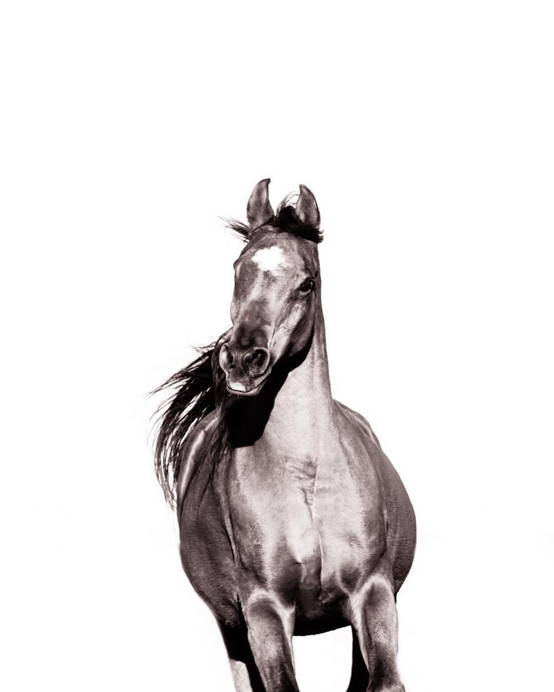Pin by Natalie on Horses | Pinterest | Horse, Baby horses and Equine ...