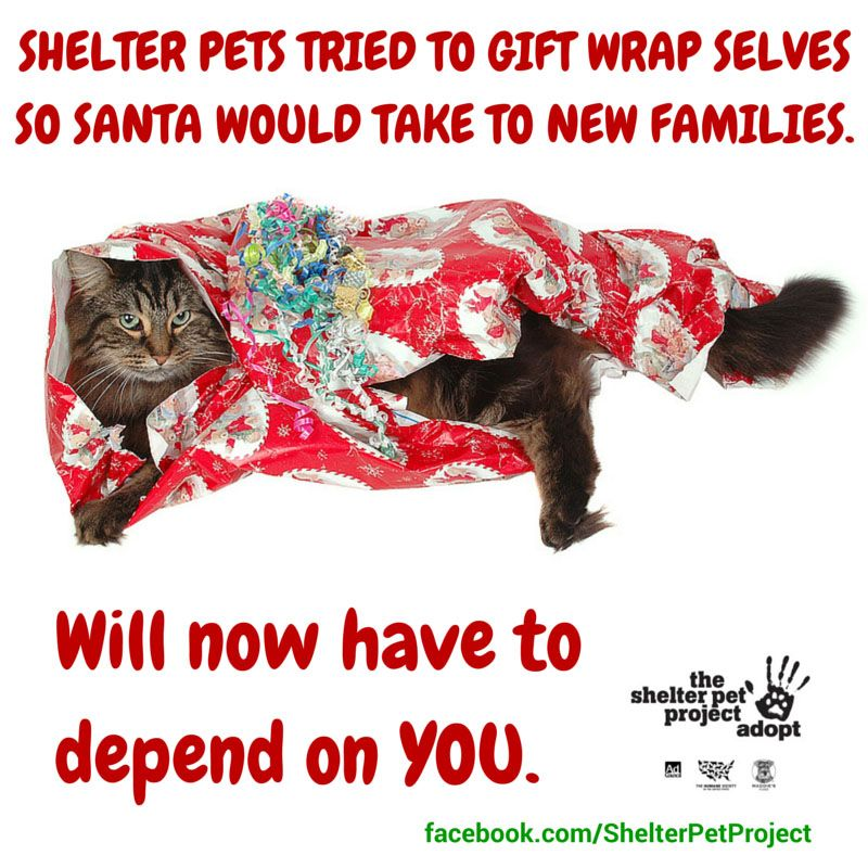 Merry Christmas From Everyone Here At The Shelter Pet Project