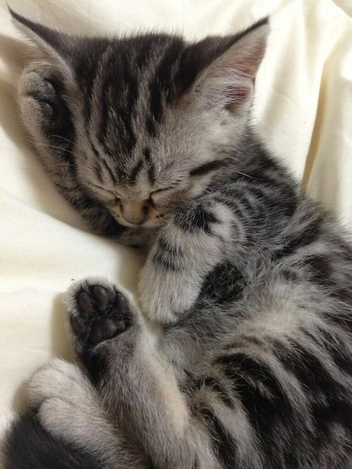 Pin By Patricia Gross On On Stand By Pics Board Cute Cats Kittens Cutest Sleeping Kitten