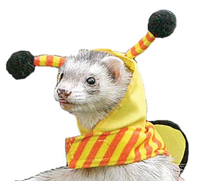 Winnie-the-Ferret?