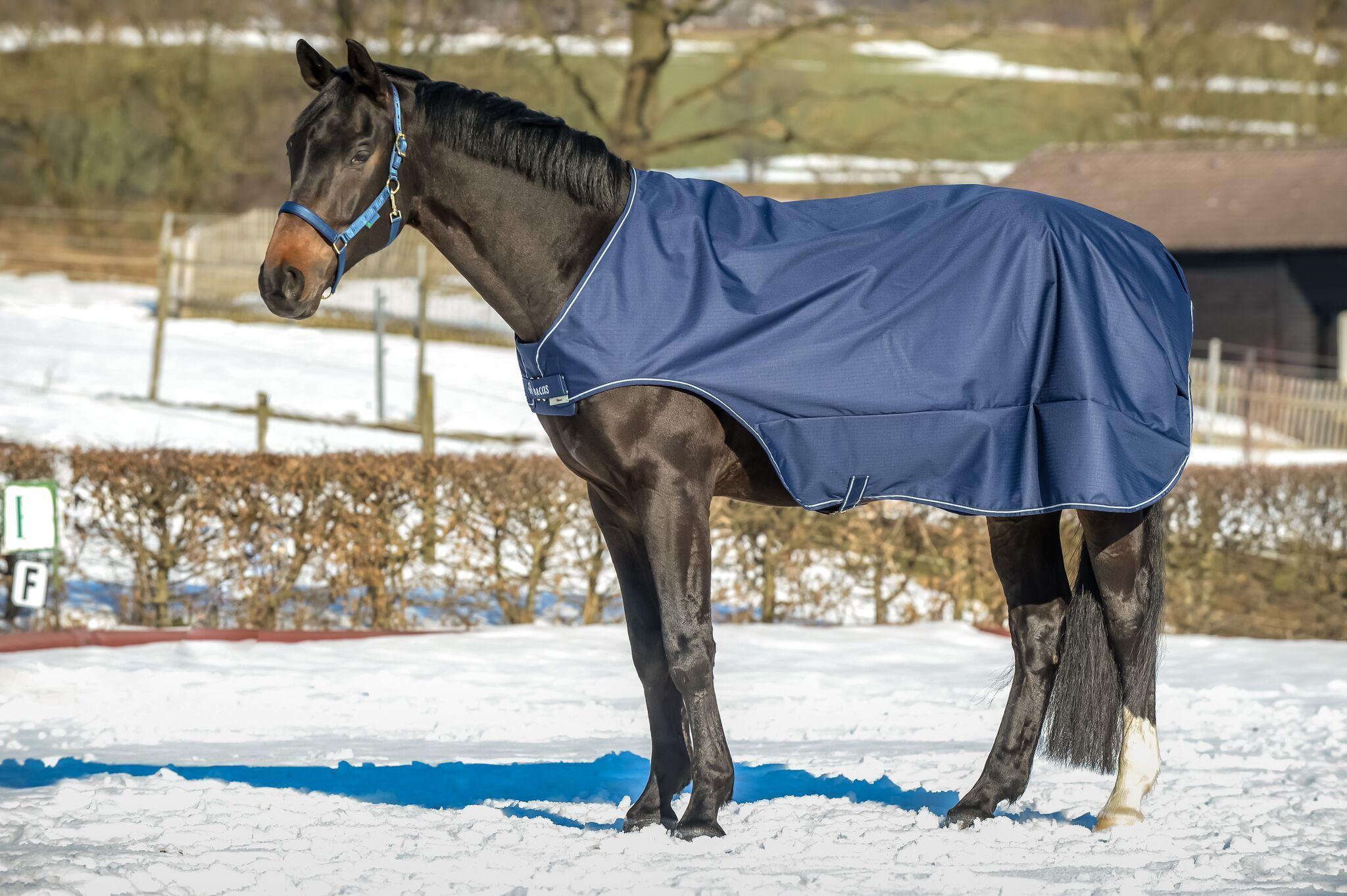 Walker Rug Bucas Horses Horse Rugs