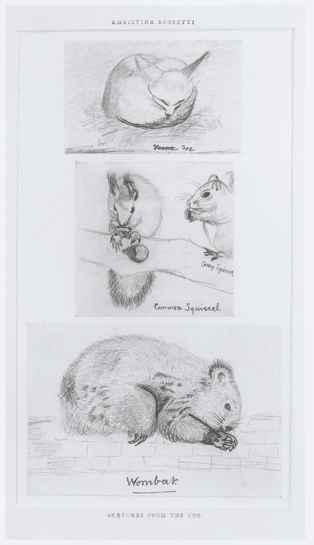 Three pencil sketches of animals from london zoo including a wombat by christina rossetti