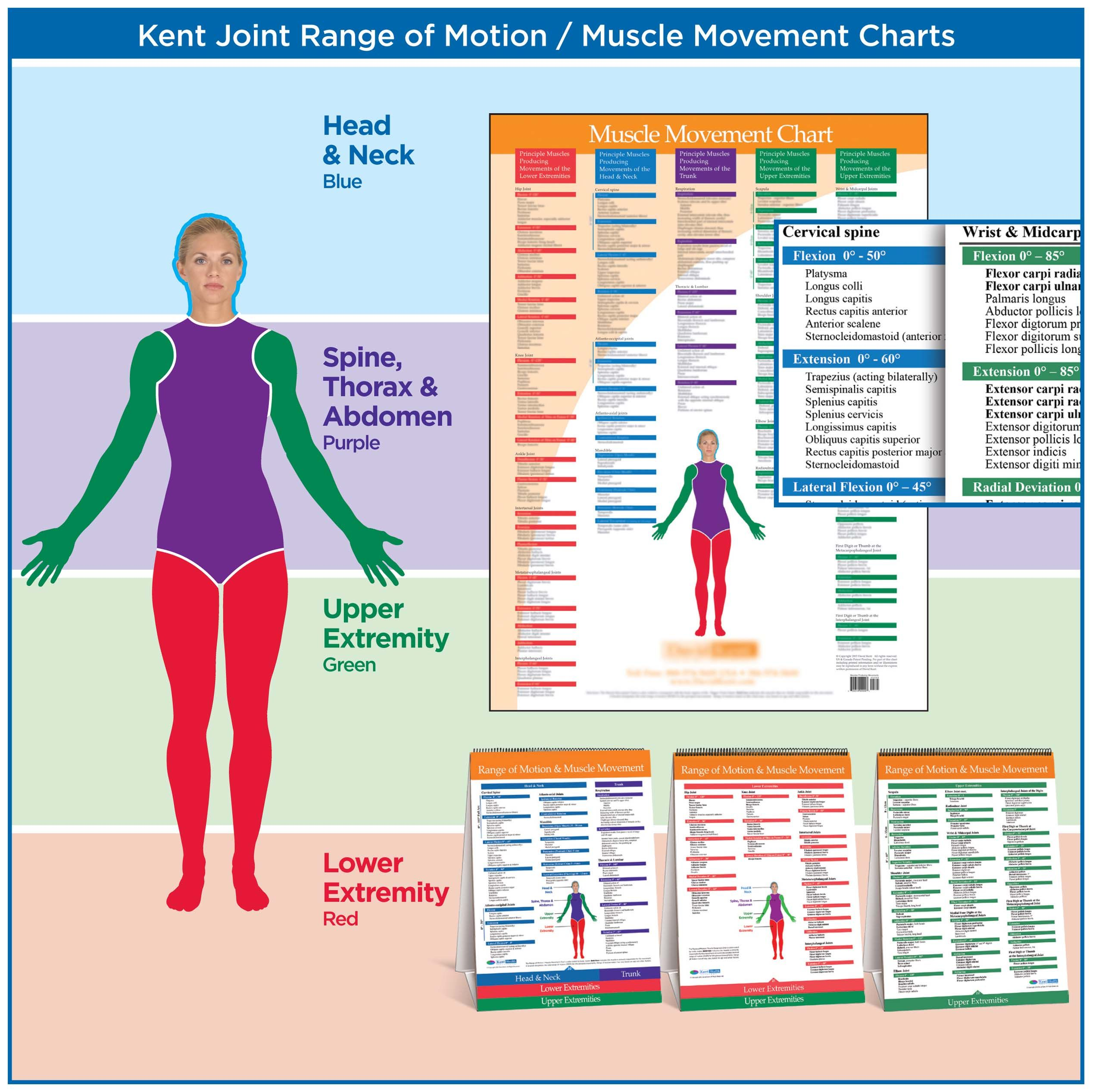 normal joint range of motion chart