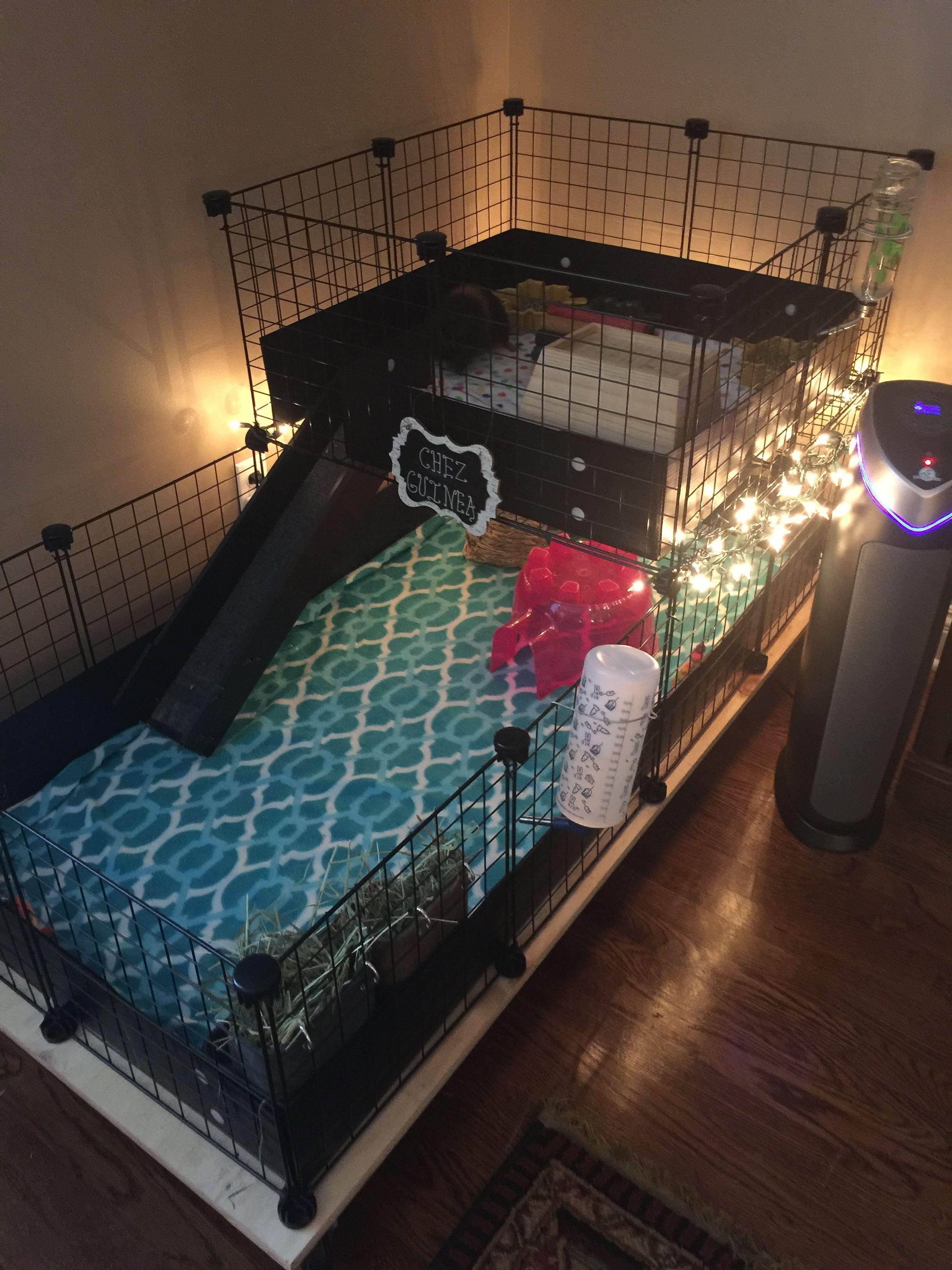 Pin On Dog Room