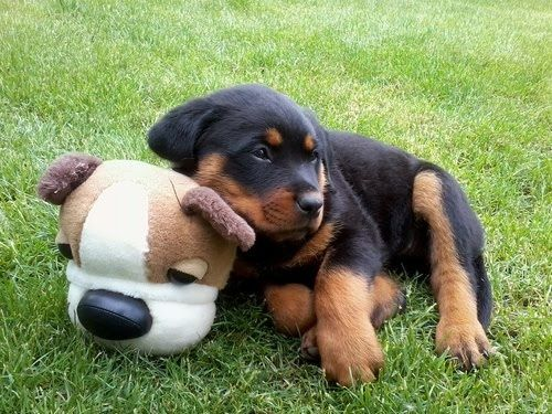 This is MY toy...so hands off!