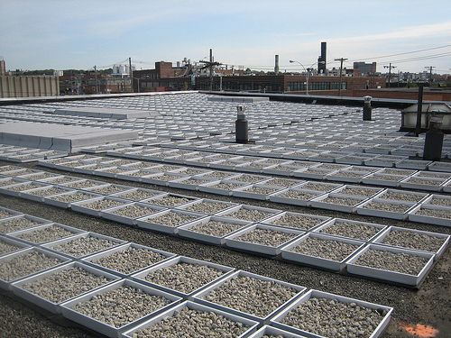 Photo Courtesy Of Gowanus Canal A Blue Roof System Detains Rainwater Directly On A Rooftop And Slowly Releases That Water To The Sew Blue Roof Green Roof Roof